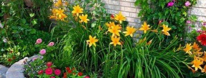 Многолетние цветы на всё лето: лучшие сорта для озеленения дачи