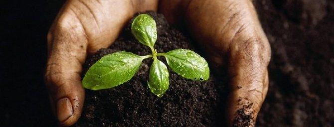 От чего зависит плодородие почвы или как ухаживать за грунтом на даче