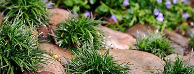 Выбираем подходящие камни для альпийской горки: каким породам отдать предпочтение?