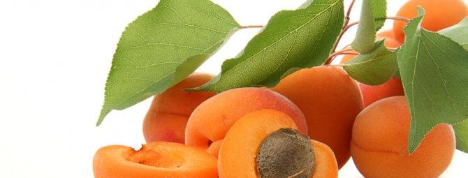 Можно ли вырастить абрикос из косточки в домашних условиях