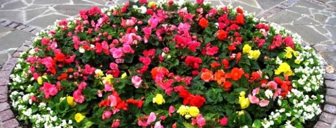 Примеры оформления красивых цветников и правила создания хорошей клумбы