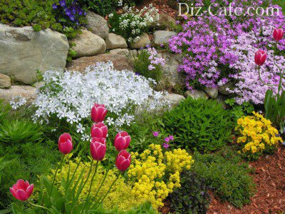 Покровные и цветущие растения для альпинария