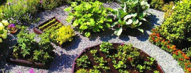Как сделать красивые грядки на своем огороде: подборка оригинальных идей