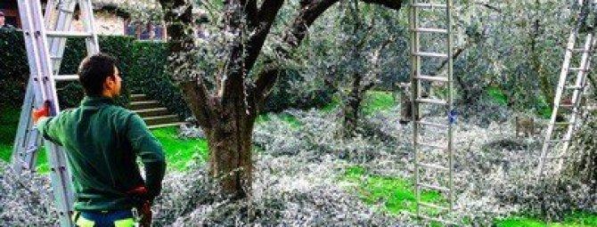 Обрезка плодовых деревьев и кустарников весной, осенью и зимой