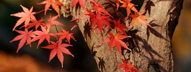 В конце октября на улице зацвел гиацинт, что делать с цветком?