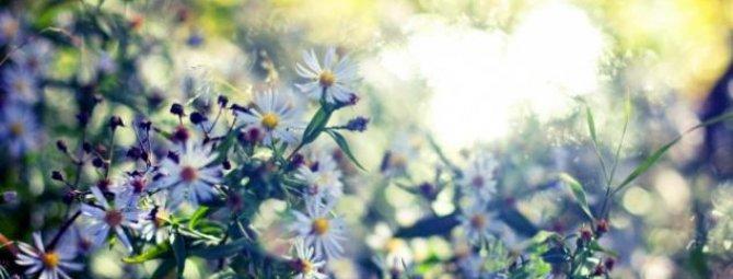Дизайн однотонных клумб и моноцветников: как создать монохромный сад?