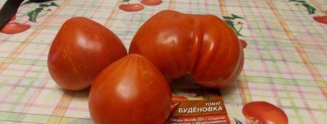Томат Будёновка — характеристика сорта и особенности выращивания