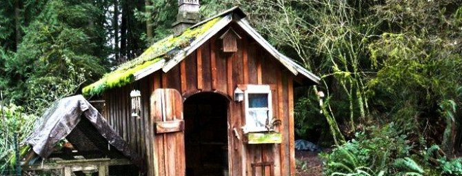 Как построить курятник: инструкция по возведению «особняка для кур» на даче