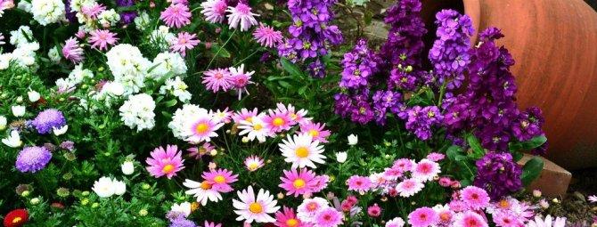 Схемы посадки цветов на клумбе для начинающих: от простого к сложному