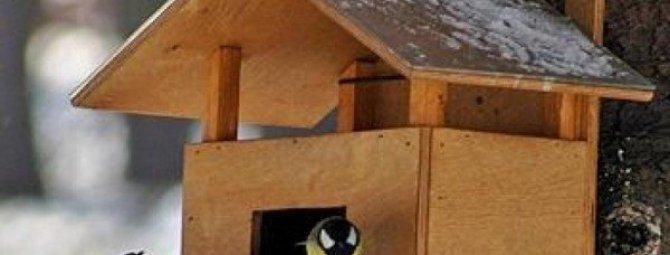 Как сделать кормушку для птиц своими руками: разбор нескольких лучших конструкций