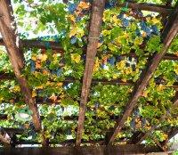Сорта клубники  описание фото отзывы садоводов