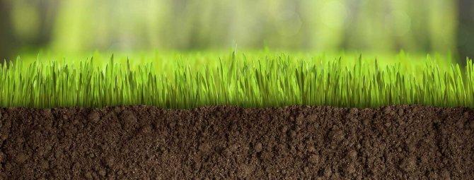 смесь газонных трав в спб