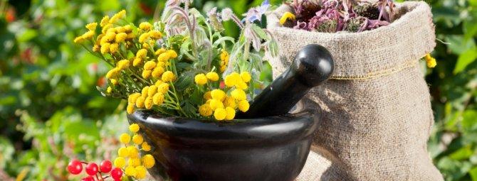 Какие лекарственные растения можно выращивать на огороде?