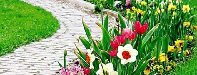 Бордюрные цветы: подбор низкорослых многолетников и однолетников