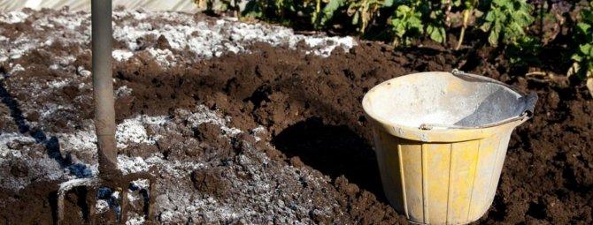 Известкование почвы в саду: зачем, когда и как это необходимо делать?