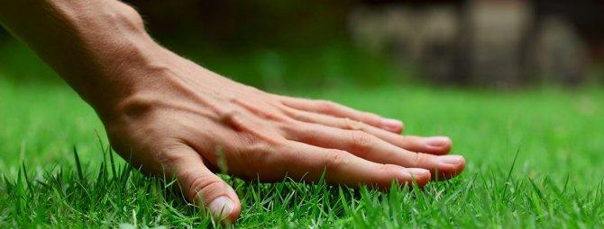 что можно посадить вместе с газонной травой