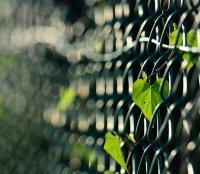 Опоры для вьющихся растений: что можно соорудить для «лазящих» обитателей сада?