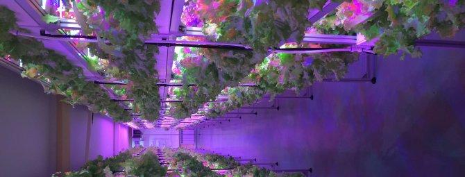 Аэропоника своими руками: собираем богатый урожай прямо из воздуха