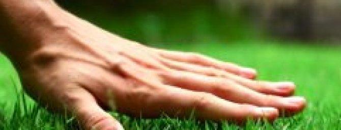 Технология ухода за газоном: обзор 6-ти важных процедур «травяной» заботы