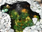 Разведение рыбы в искусственных водоемах
