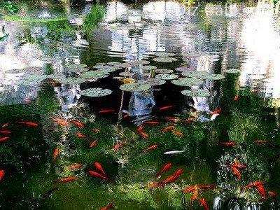 Весной начинают подкармливать рыб