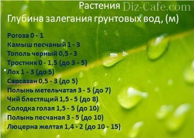 Растения-индикаторы