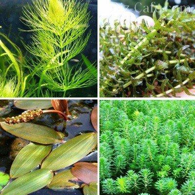 Наиболее привлекательные формы растений-оксигенераторов