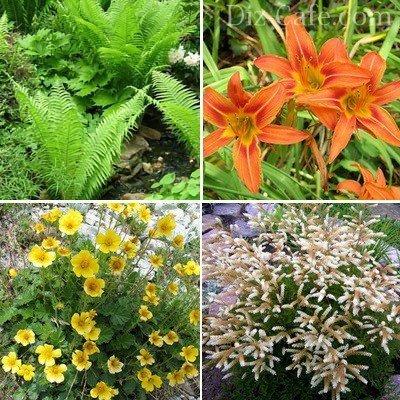 Красивоцветущие болотные растения