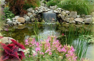 Зеленные насаждения у водоема