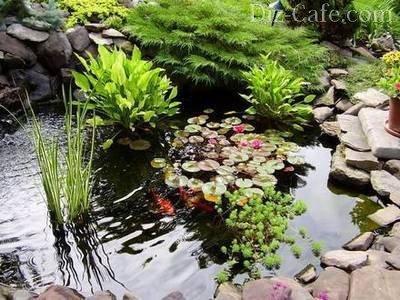 Живые обитатели прудов в тени растений