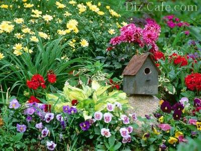 Полевые цветы в оформлении сада