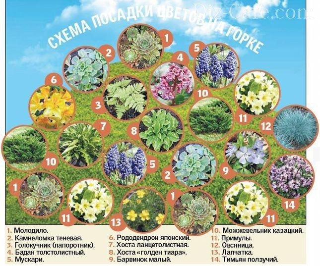 Правильное размещение растений