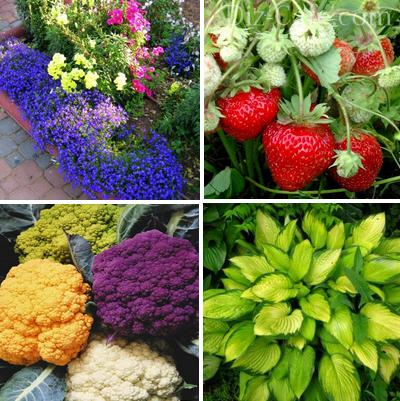 Растения для обустройства садовой зоны