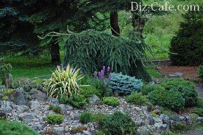 Альпинарий с хвойными растениями