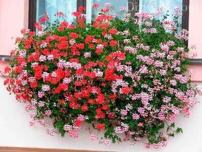 деревянные ящики для цветов на даче фото