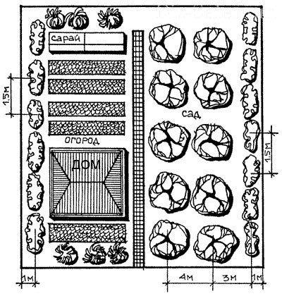 План сада и огорода