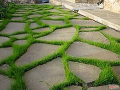 Газонная трава между элементами дорожки