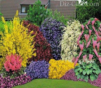 Многолетние цветы для дачи.фото