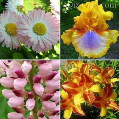 Повторно цветущие красавцы