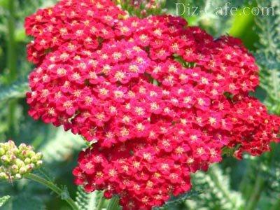 Многолетние красивые цветы цветущие все лето фото