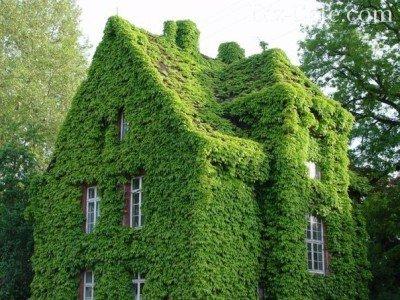 Заросший зеленый дом