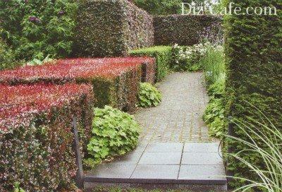 Многоцветная живая изгородь