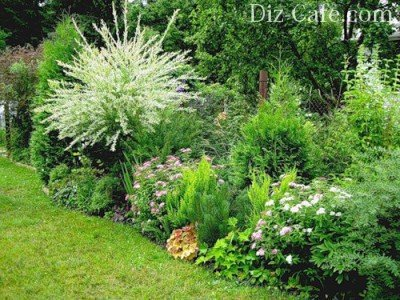 Свободно растущая живая изгородь