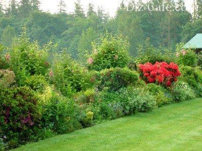 Изгородь из листопадных кустарников, деревьев