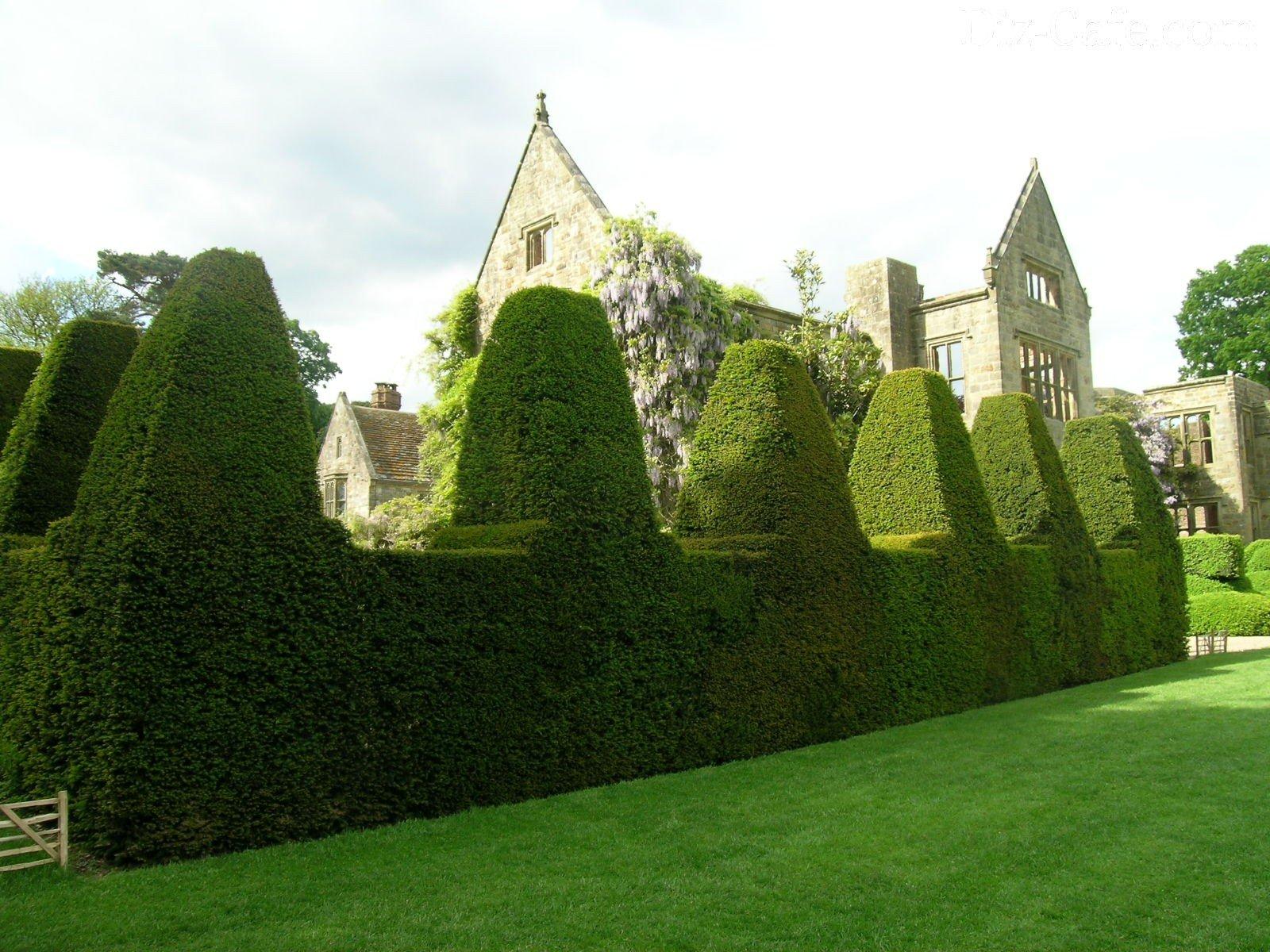 Живые изгороди на даче фото