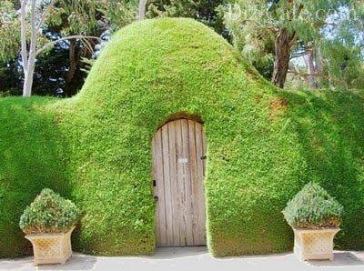 Зеленая ограда для садового участка
