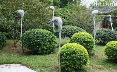 Каркасный топиарий страусы