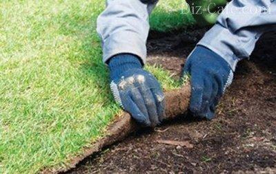 Проверка почвы под газоном