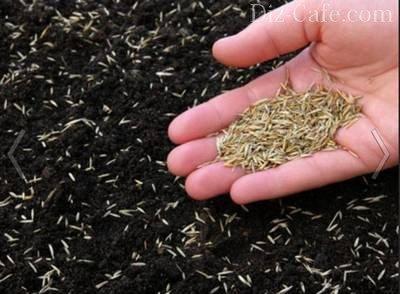 Внесение семян в подготовленную почву