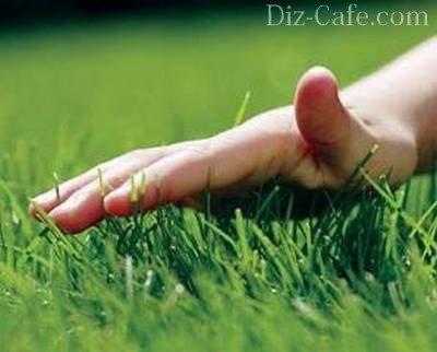 Выкашивание газона